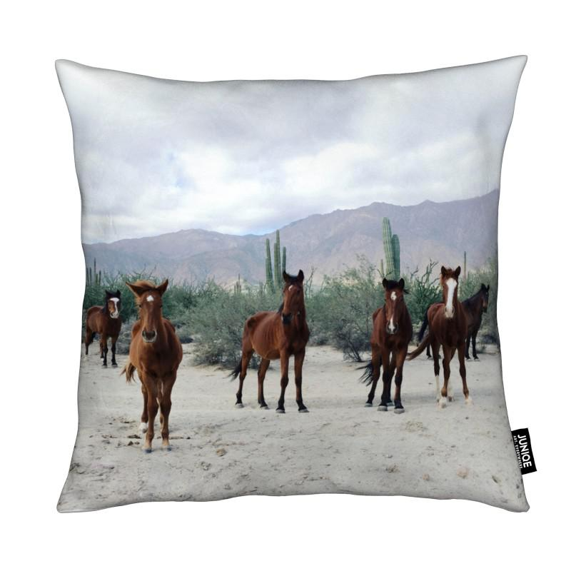 Horses, Deserts, Bahía de los Ángeles Wild Horses