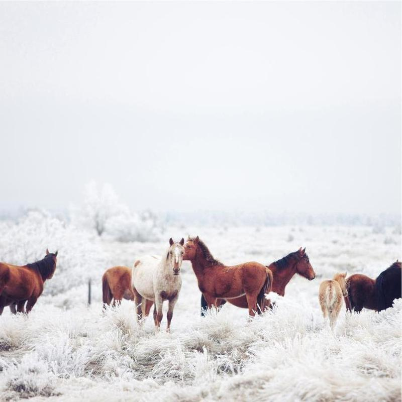 Winter Horseland -Leinwandbild