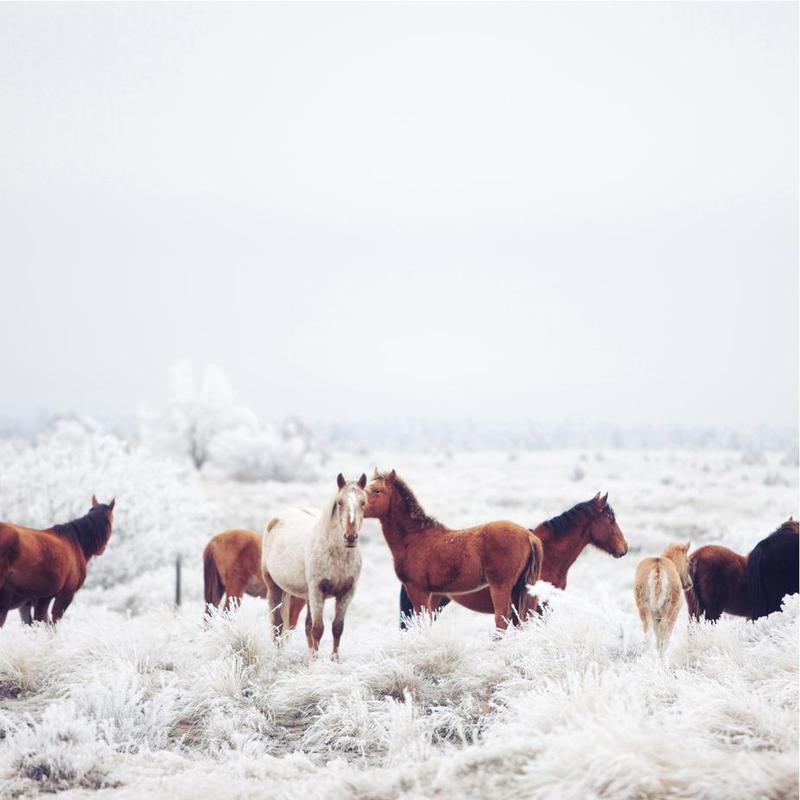 Winter Horseland Acrylic Print
