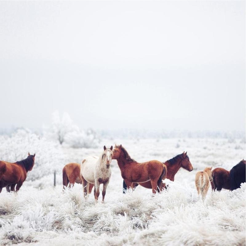 Winter Horseland -Alubild
