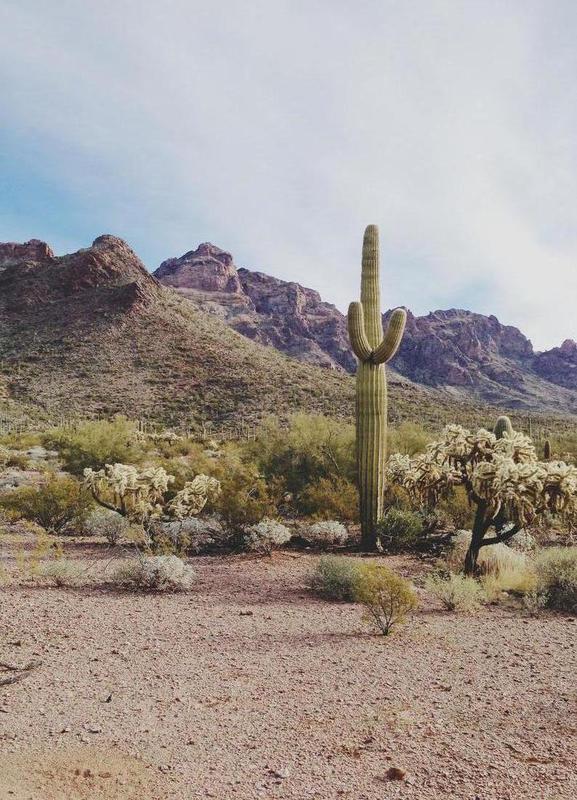 Arizona Cactus canvas doek