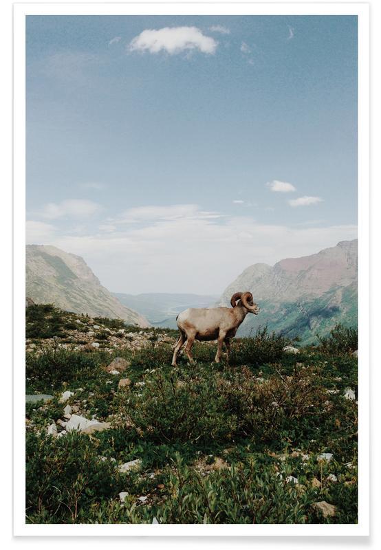 Berge, Schafe, Bighorn Sheep -Poster