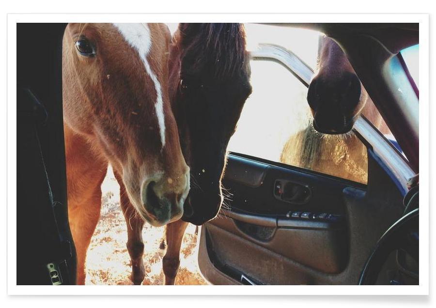 Pferde, Car Horses -Poster