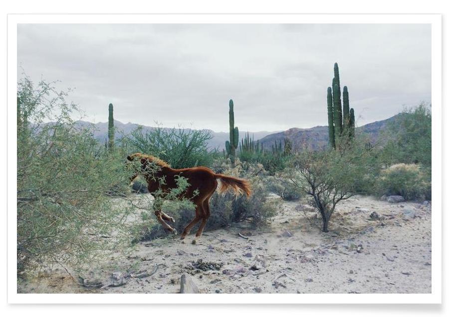 Wüsten, Pferde, Mexican Horse Ride -Poster