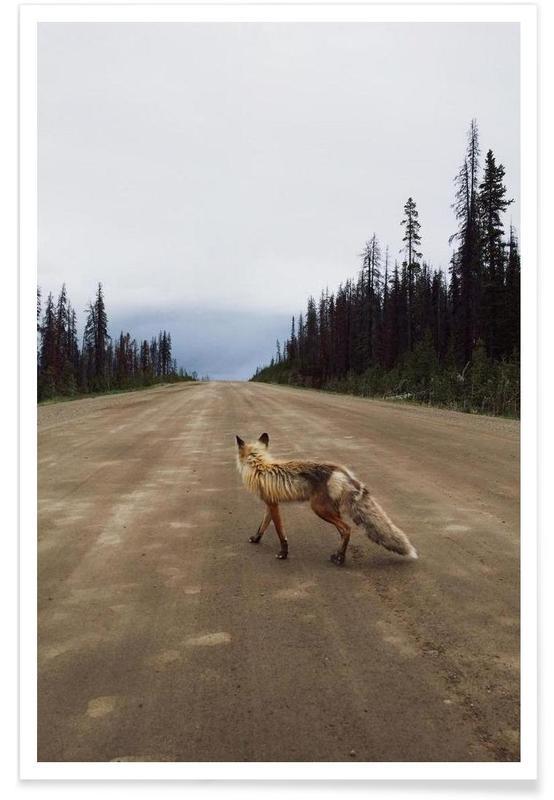 Road Fox affiche
