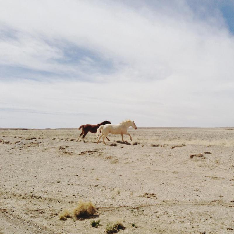 Bloomfield Horse Run alu dibond