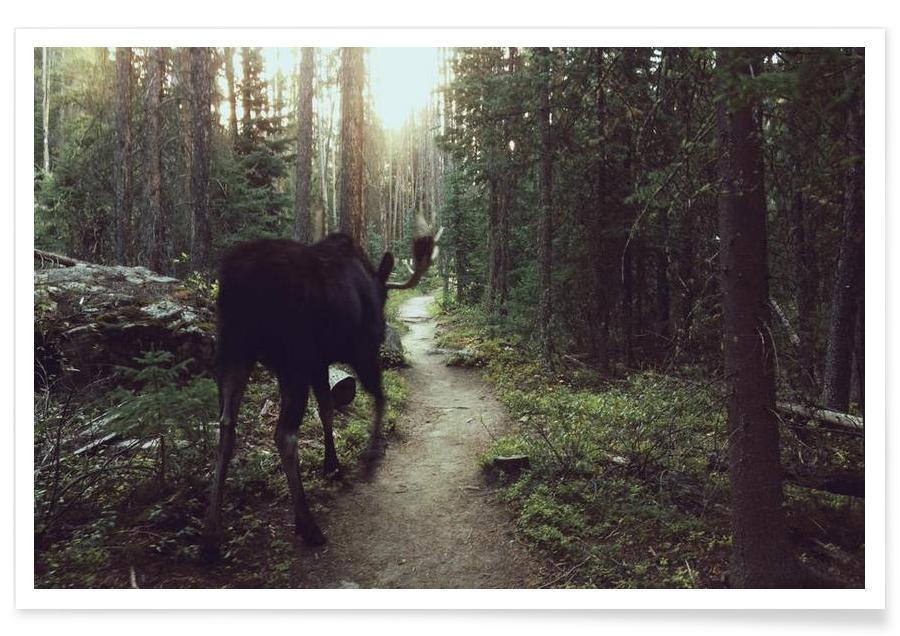 Wälder, Trail Walking Moose -Poster