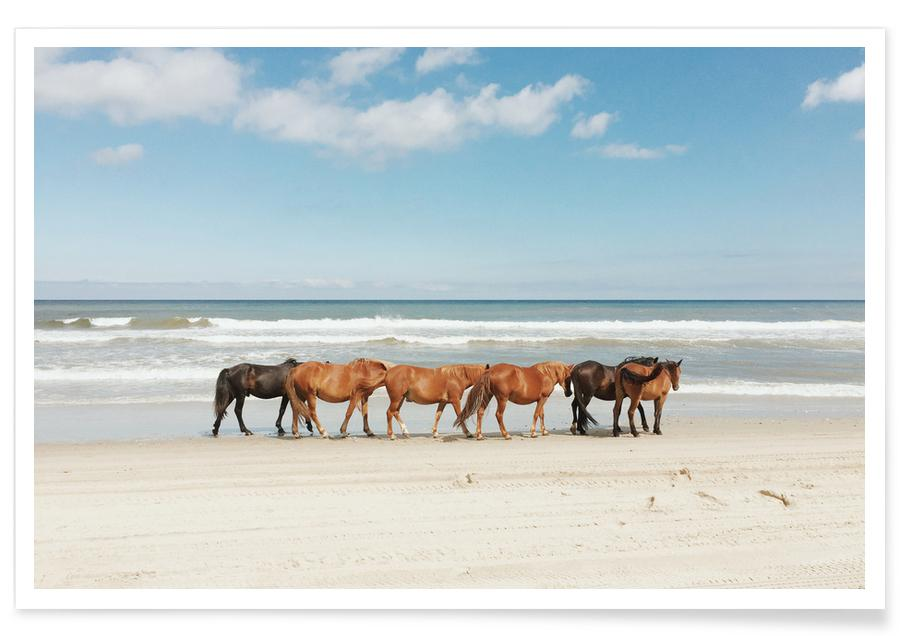 Pferde, Beach Horses -Poster