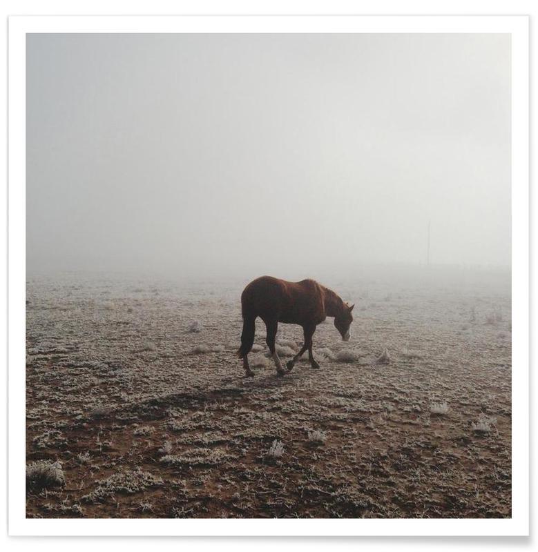 Deserts, Horses, Fogged Horse Poster