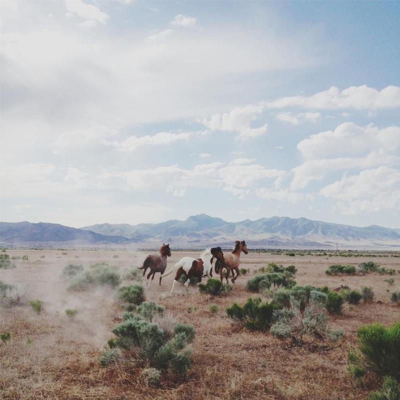 Running Horses -Acrylglasbild