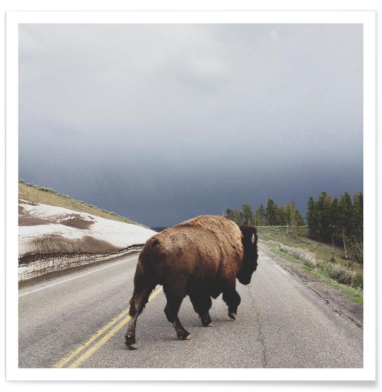 Büffel, Street Walker -Poster