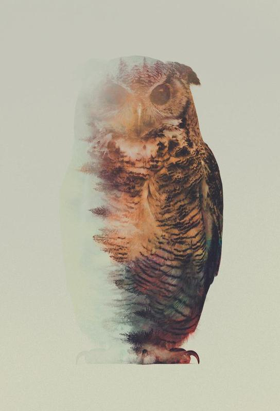 Norwegian Woods: The Owl -Alubild