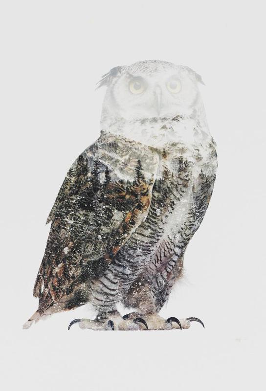 Artic Owl -Alubild
