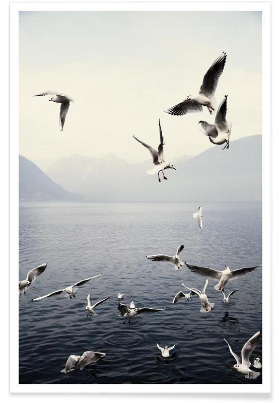 Mouettes, Océans, mers & lacs, Photographie de mouettes affiche
