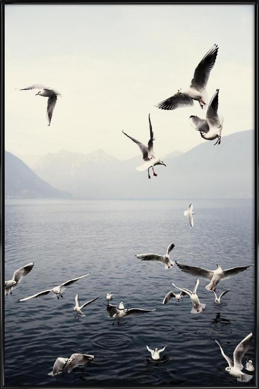 Seagulls Framed Poster