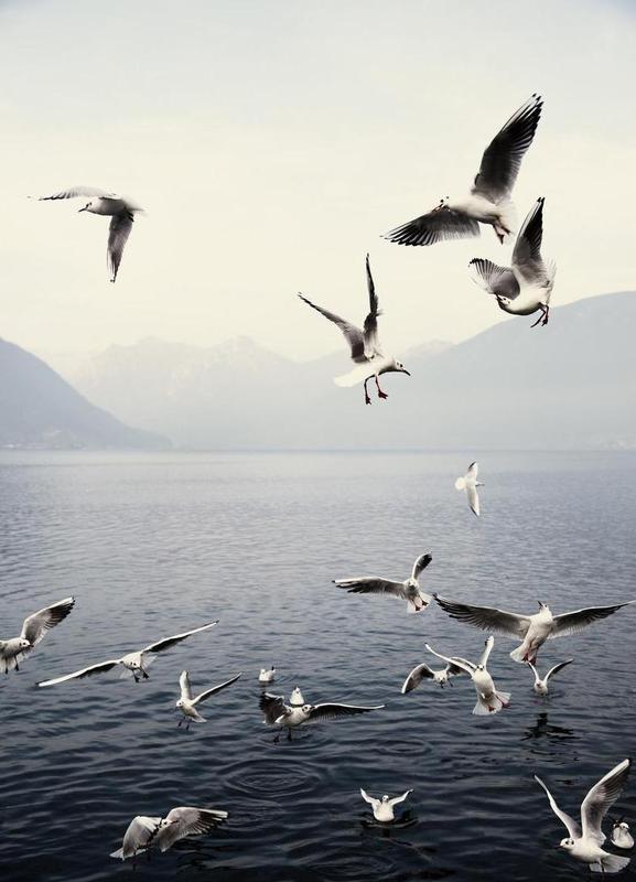 Seagulls canvas doek