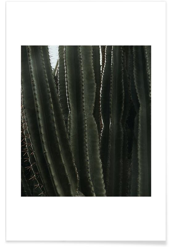 Kaktus, Cactus 01 -Poster