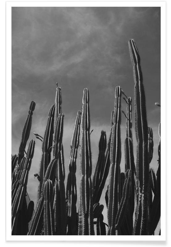 Cactus 02 Poster