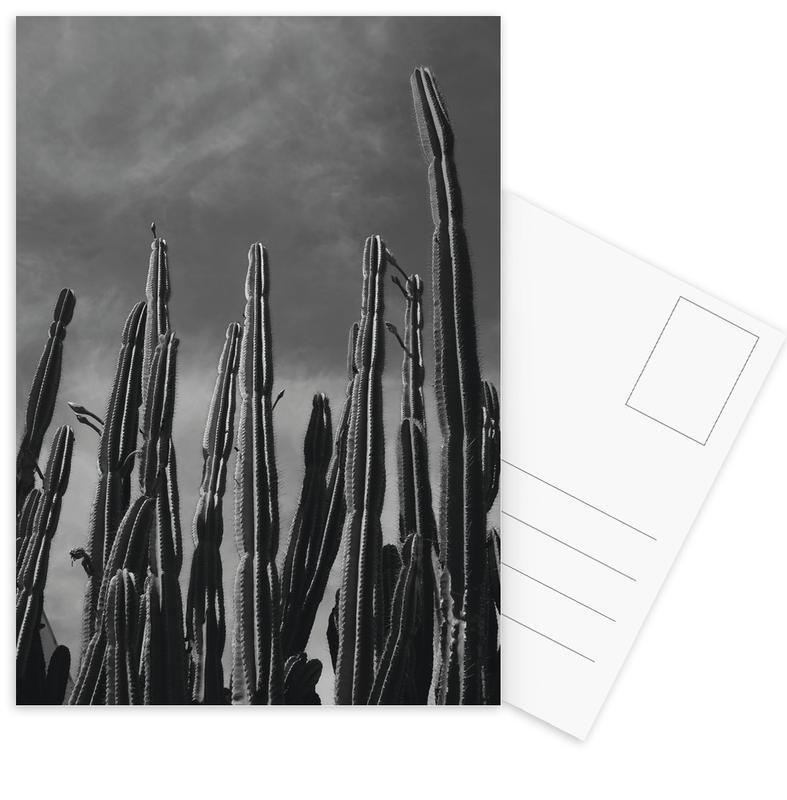 Noir & blanc, Cactus, Cactus 02 cartes postales
