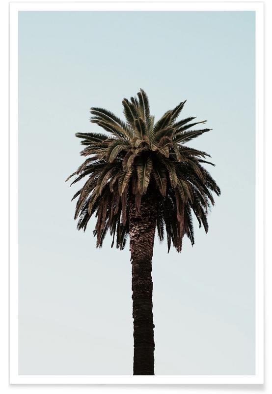 Palmer, Palmtree Poster