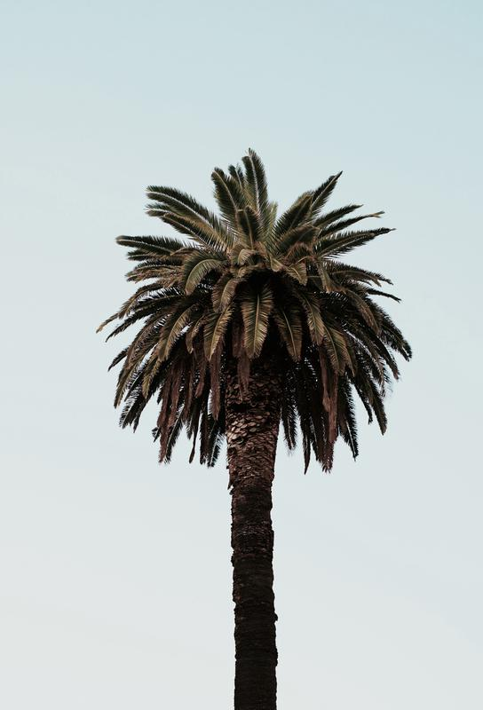 Palmtree Acrylic Print
