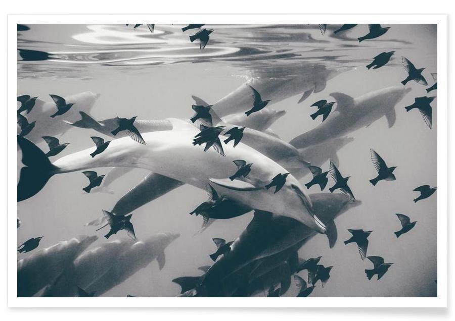 Dolfijnen, Found Out poster