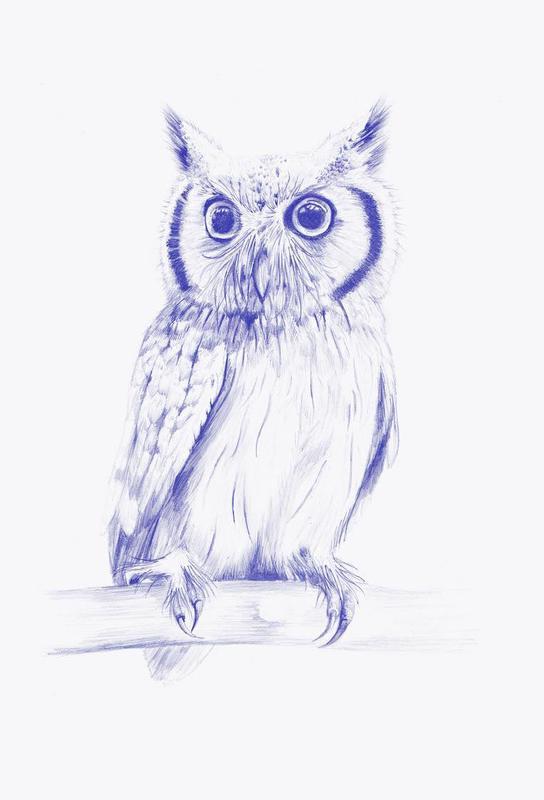 Wise Owl Impression sur alu-Dibond