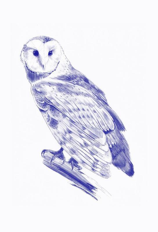Curious Owl -Alubild