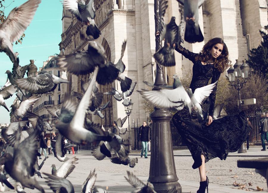 Doves in Paris II -Leinwandbild