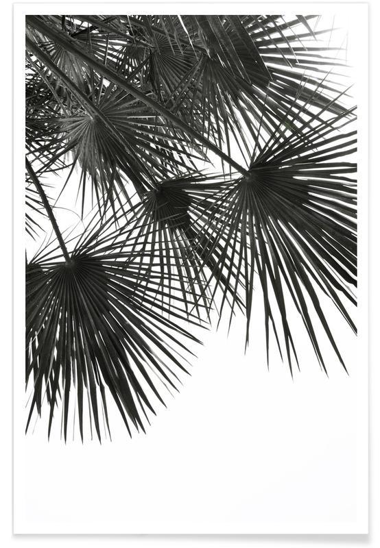 Sort & hvidt, Palmer, Endless Summer - Wind Plakat