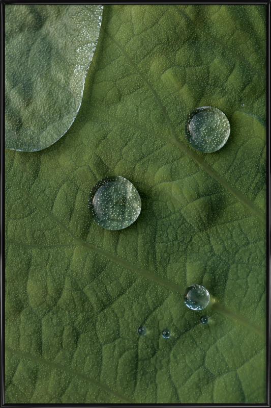 Lotus Water Drops ingelijste poster