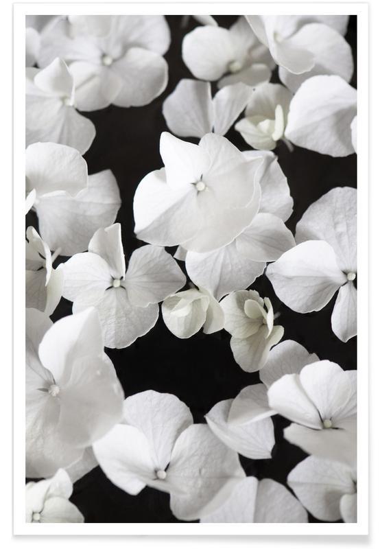 White Beauty On Black Poster
