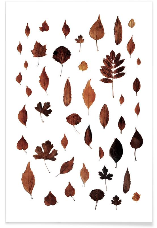 Signs Of Autumn Poster