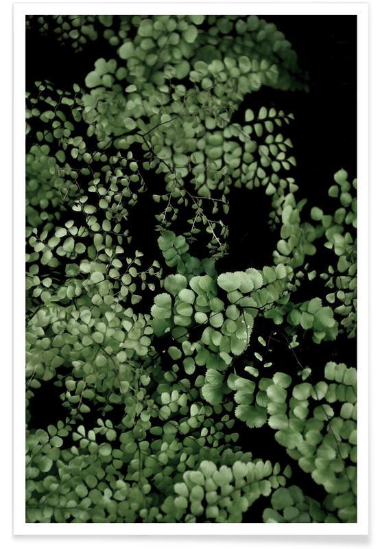 Tropical Garden 2/5 poster