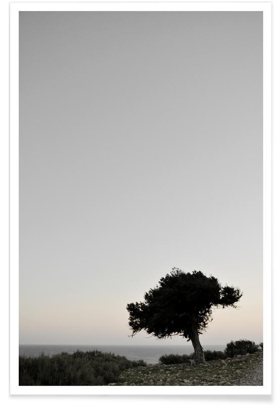 Arbres, Calm View affiche