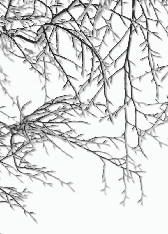 Snowy Days canvas doek