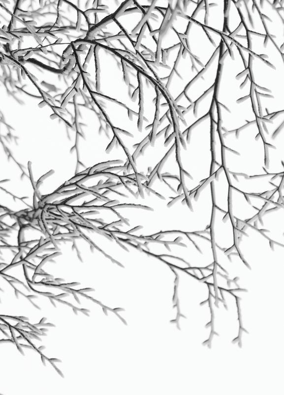 Snowy Days toile