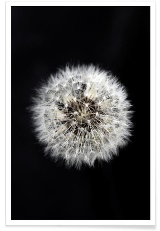 Pissenlits, Black and White Dandelion affiche
