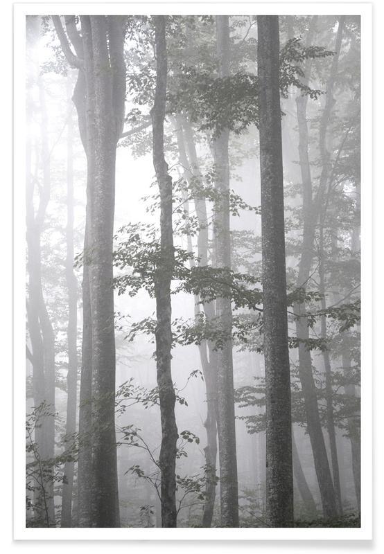 Wälder, Foggy Autumn Forest -Poster