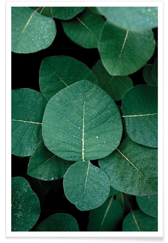 Foglie & piante, No Leaves No Life poster