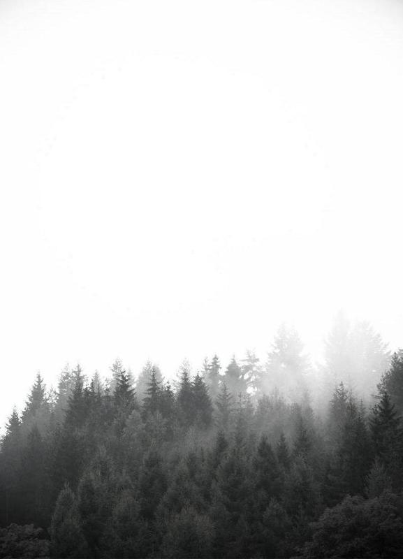 Walk Through The Forest canvas doek