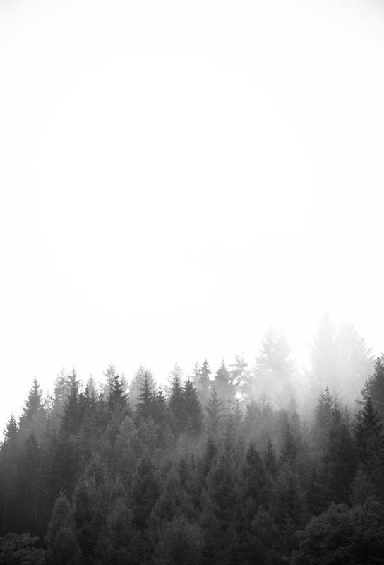 Walk Through The Forest -Alubild