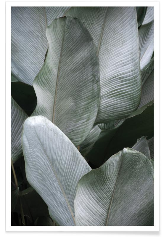 Tropical Silver Leafs -Poster