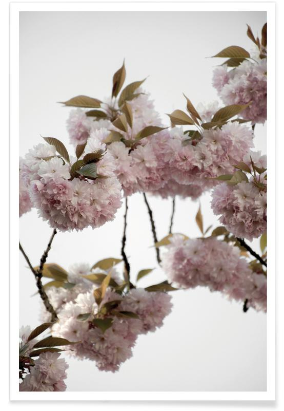 Clouds Of Cherry Flowers -Poster