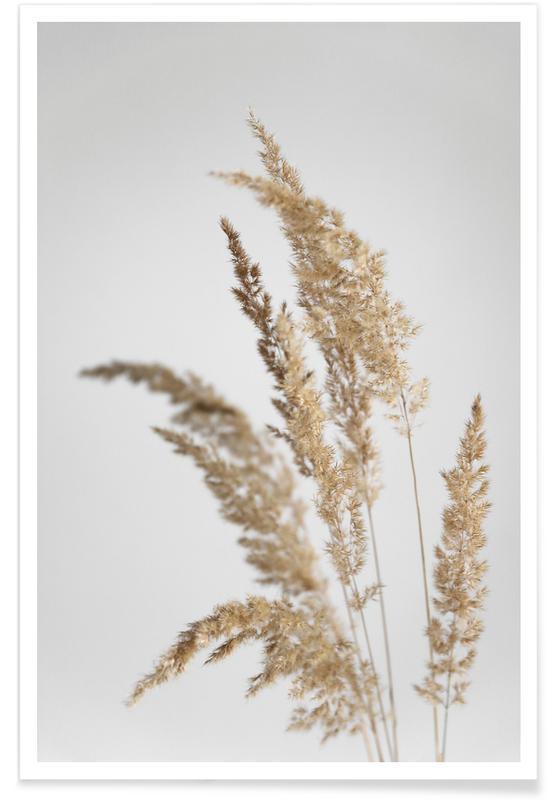 Feuilles & Plantes, Golden Pampas Grass affiche
