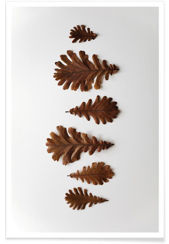 Blätter & Pflanzen, Shapes Oak Leafs -Poster