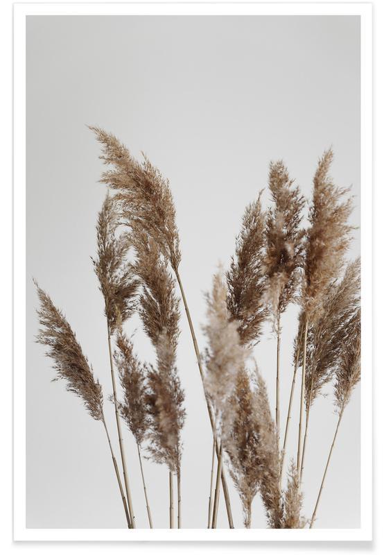 Feuilles & Plantes, Natural Pampas Reed affiche