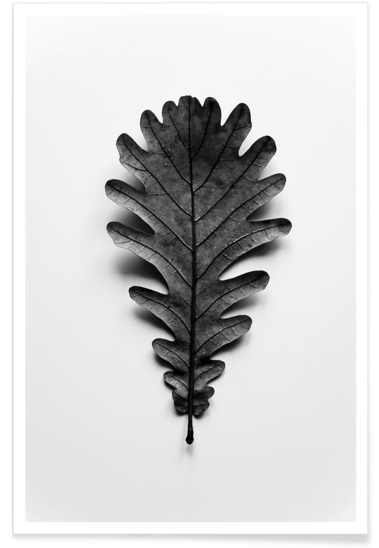 Noir & blanc, Feuilles & Plantes, Autumn Treasures - Black Oak Leaf affiche
