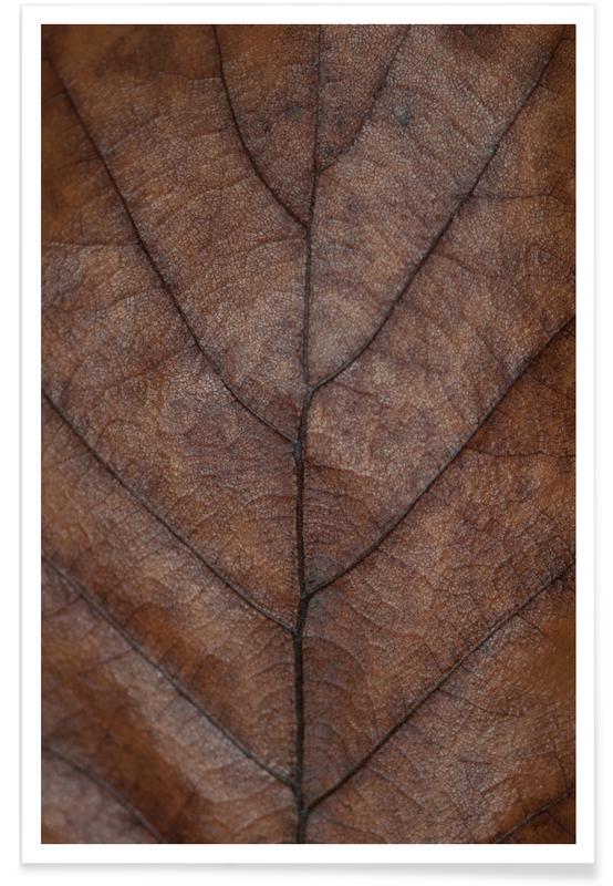 Bladeren en planten, Brown Autumn Hues - Oak Leaf poster