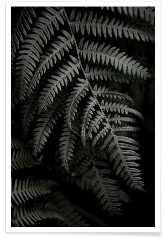 Feuilles & Plantes, Dark Forests Fern affiche